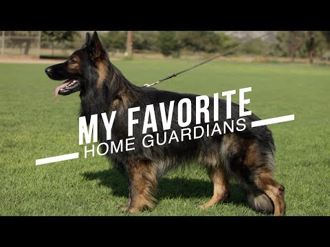 BEST DOG BREEDS FOR HOME PROTECTION: NO TRAINING NECESSARY