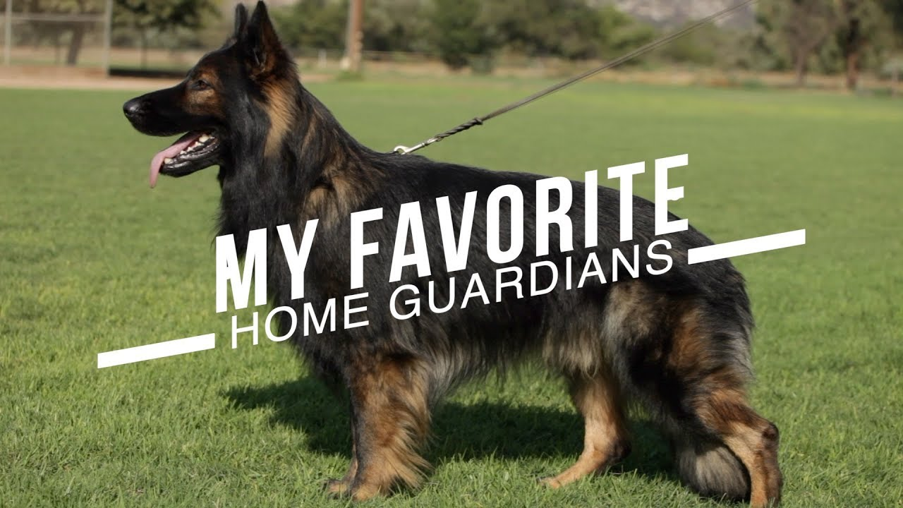 Best Dog Breeds For Home Protection No Training Necessary Youtube