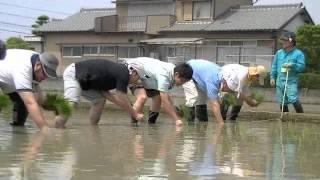 静岡県が開発した酒米「誉富士」をJA大井川と焼津酒米研究会様そして地...