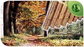🎵 2 HORAS de Música de Flauta Pan, Sons da Natureza 🎧  Sons de Flauta Indiana, Acalmar a Mente