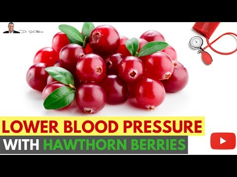 💔 How To Lower Your Blood Pressure Using Hawthorn Berries - by Dr Sam Robbins