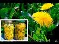 Dandelion Miracle Plant That Cures Cancer, Hepatitis, Liver, Kidneys!