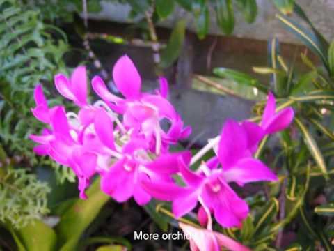 Palma Sola Shores Garden with John Denver's Garden Song