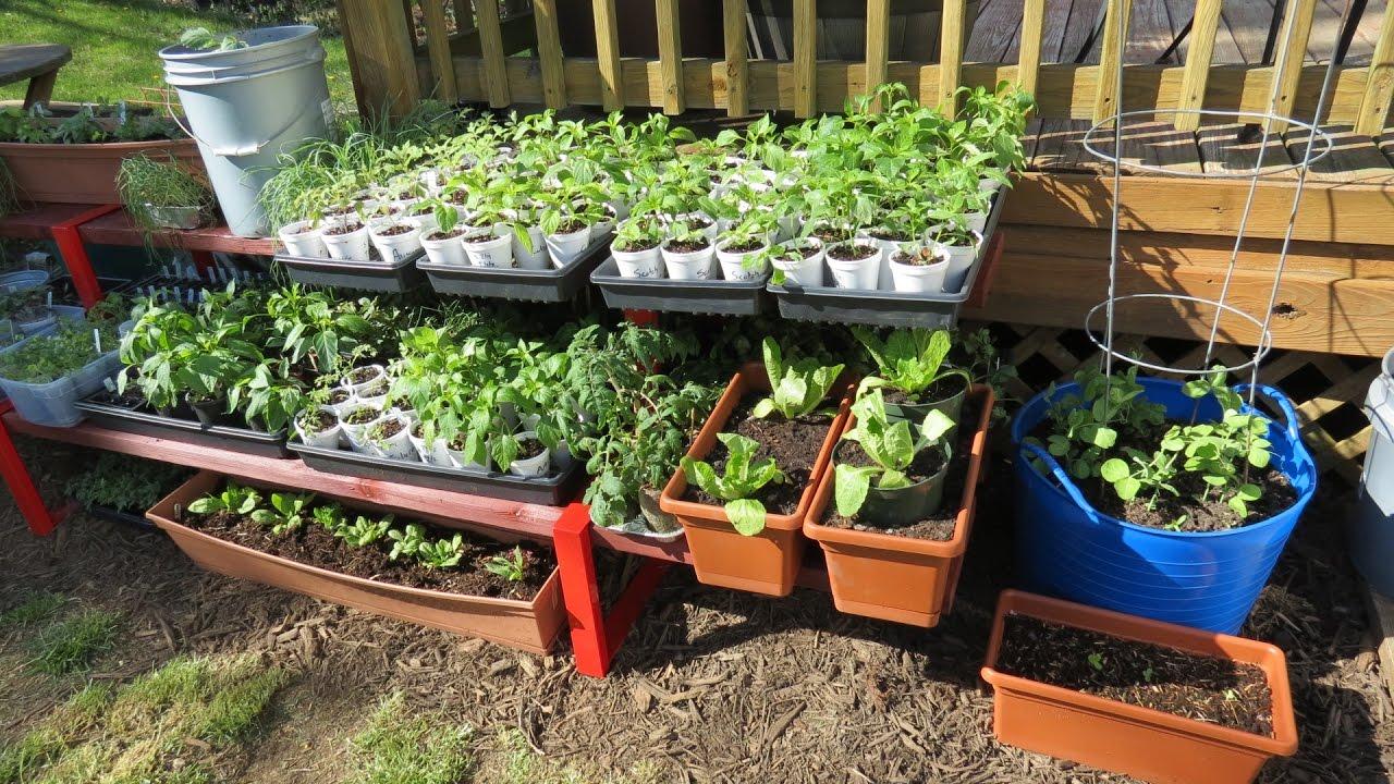 container garden shelving