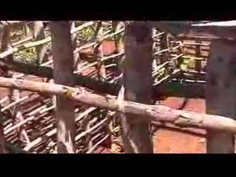 199 Kenya Funzi. Frame of a house (mangrove woods and sisal)