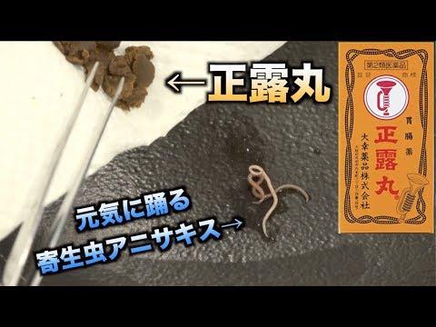 【実験】寄生虫アニサキスに正露丸を漬けるこうなる!!!