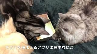 ゲームに熱中する猫たち