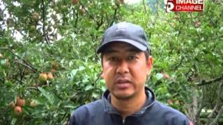 Video Mustang ma Syau ko Aakarsan Badhyo Report download MP3, 3GP, MP4, WEBM, AVI, FLV Agustus 2018