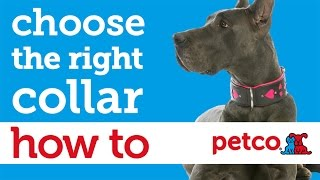 How To Buy The Best Dog Collar Or Harness (petco)