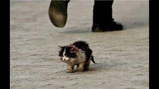 Hastalıklı Görünüyor Diye Kimse Bu Kediye Dokunmak İstemedi, Ancak Bir Adam Bunu Yaptı