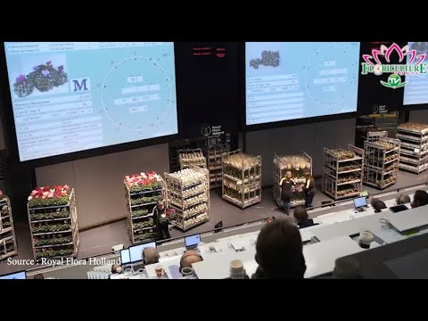 Royal Flora Holland Starts Auctions Post Covid 19
