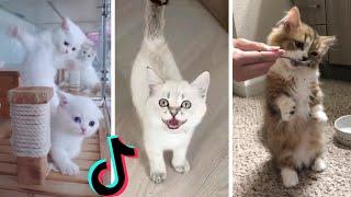Funny Kittens of TikTok ~ Cutest Kittens Compilation!