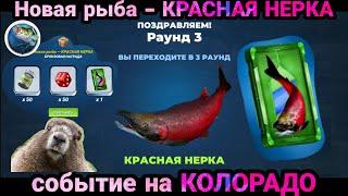Новая рыба КРАСНАЯ НЕРКА КОЛОРАДО Fishing Clash Реальная рыбалка