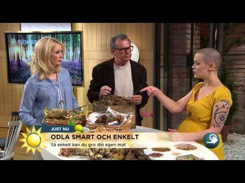 Odla smart och enkelt för köket - Nyhetsmorgon (TV4)