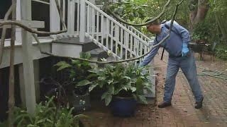 Storm raising Zika concerns