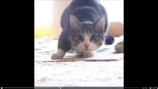 Cat Wiggle Vine
