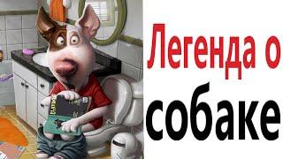 Приколы ЛЕГЕНДА О СОБАКЕ МЕМЫ Смешные видео от Доми шоу