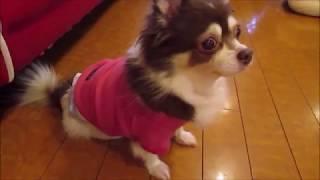 2018年11月 保護犬カフェ 鶴橋店様にて thumbnail