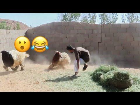الخروف ذا لعب في كاس العالم 🐏🥇؟! فلوق31 | #العيد