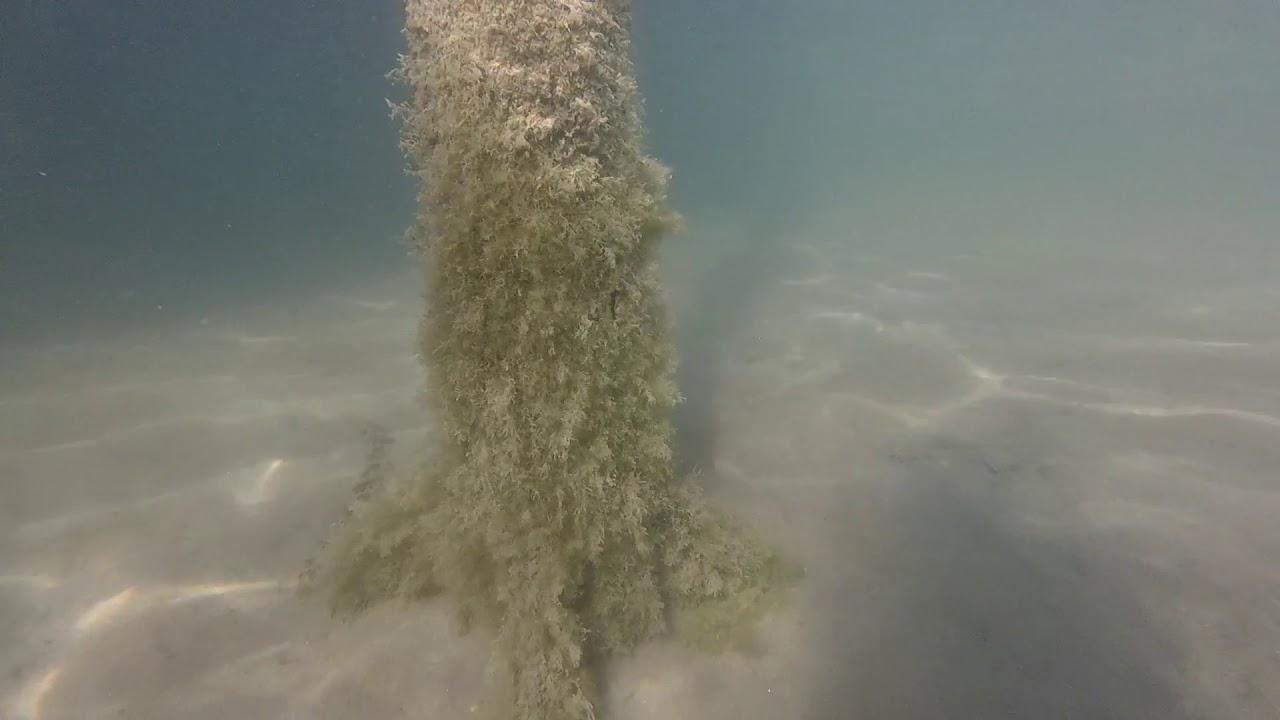 Víz alatti szopás videó