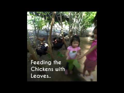 2016 Cebu Organic Farm Visit