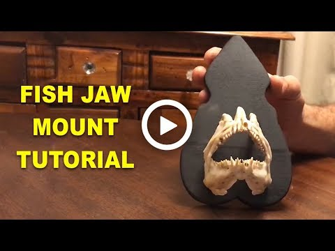 Trophy Fish Jaw Mount