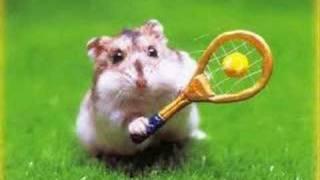 Little Hamster Song