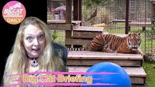 Gambar cover Big Cat Briefing 01 04 2020