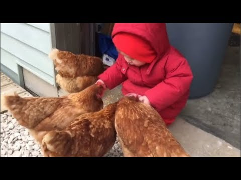 Funny Baby and Animals Moments -  Cute Funny Animals Compilation 2019  - Youtube