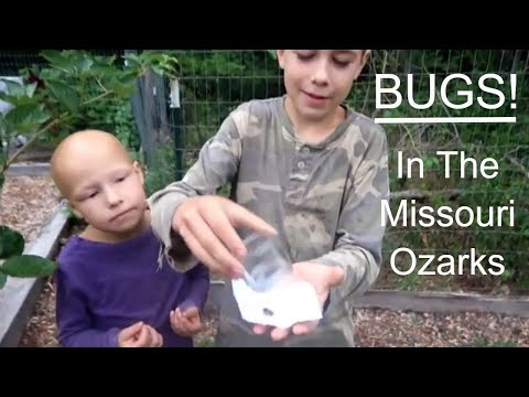 Exploring Bugs In The Missouri Ozarks