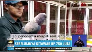 Jayabaya, Burung Merpati Seharga 1 Miliar Rupiah