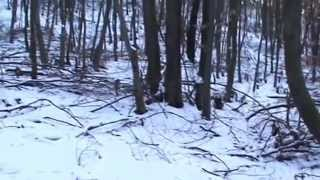 Winter Recreation in the woods in the sun-Zimný relax v lese pri slniečku