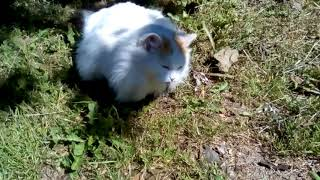 Кошка ест ящерицу.