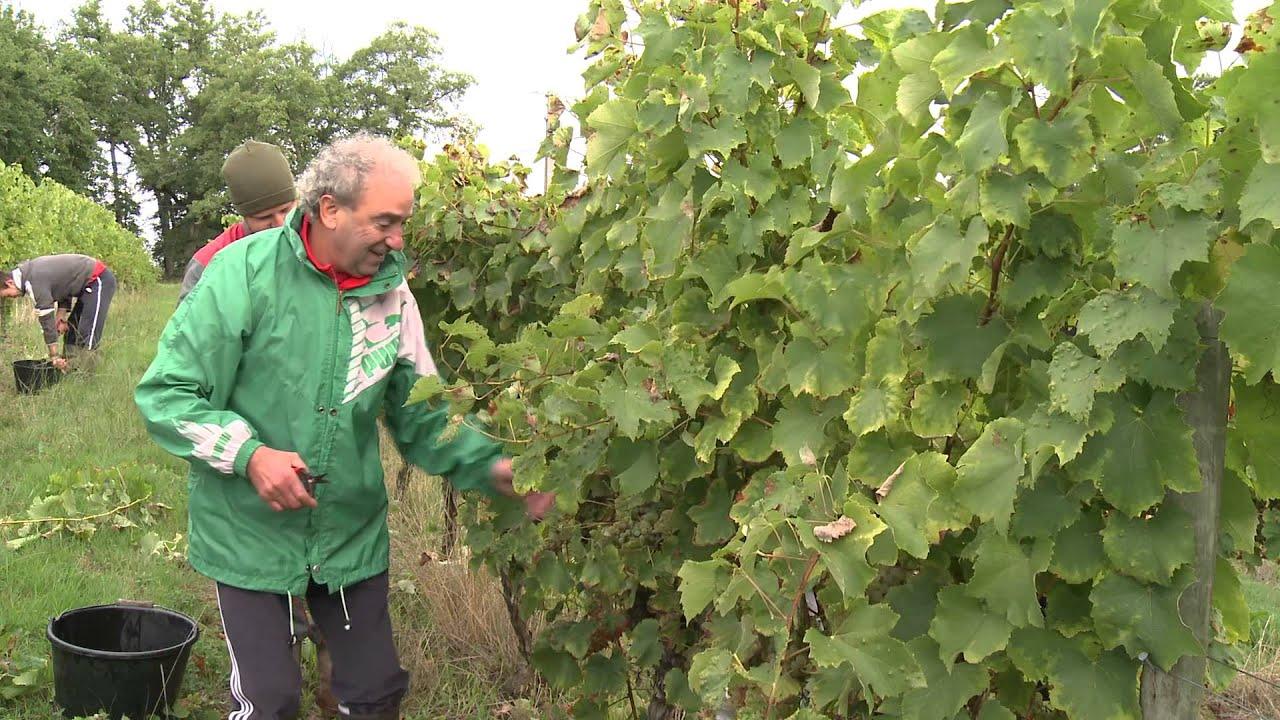 IGP Côtes de Gascogne - Vins du Sud-Ouest