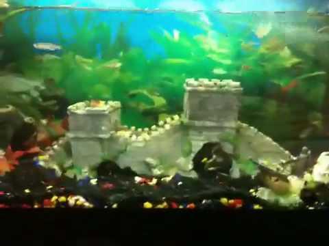 22 gallon(84 litre)Tropical Aquarium