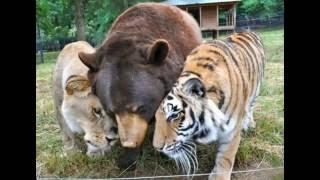 Удивительная дружба животных!