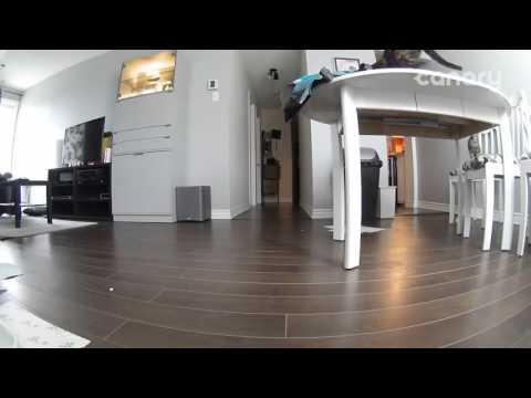 Spy cam caught Cat fail