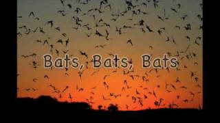Bats, Bats, Bats