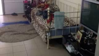 Сдам благоустроенный жилой флигель на Французском бульваре.Одесса аренда(Сдам в аренду флигель, на французском бульваре. Жилое помещение в два этажа, горячая и холодная вода, кондиц..., 2016-07-19T07:15:54.000Z)