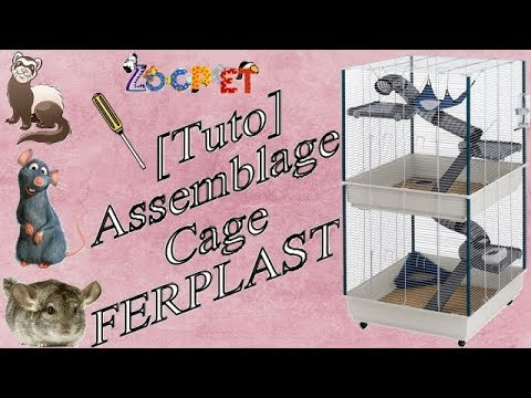 Mes rats 2 : Cage Ferplast Furet Tower