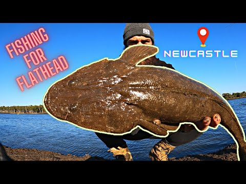 Fishing For FAT FLATHEAD. Newcastle Land Based!