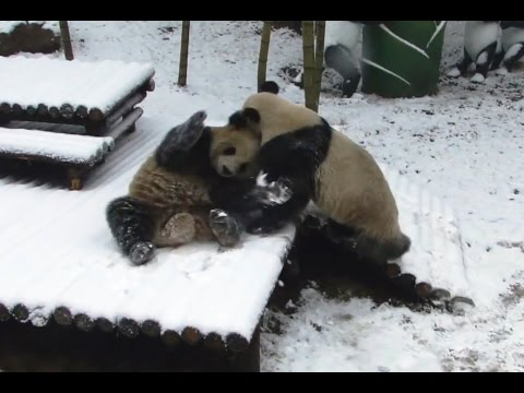 Animals Playing in Snow Compilation 2015 [NEW]