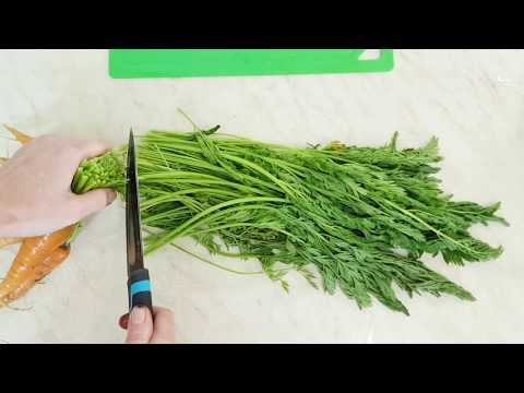 Как сушить ботву моркови на зиму