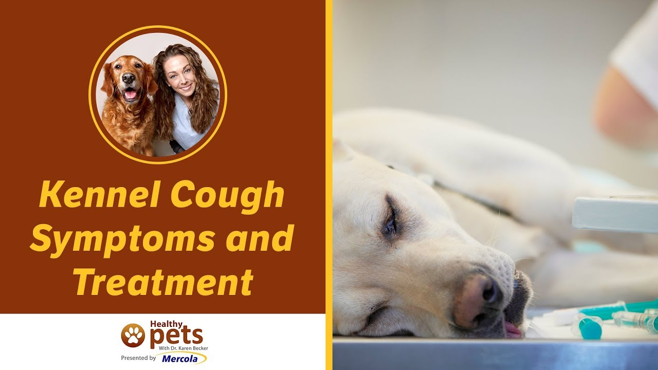 Kennel Cough Symptoms and Treatment - YouTube