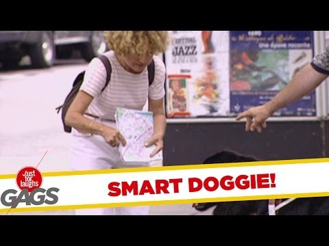 Dog Reading Map Prank! - Just For Laughs Gags