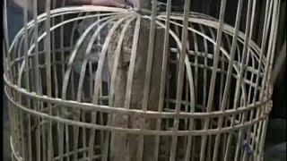 Cara Membuat Kurungan Ayam Sederhana Dari bambu Bekas