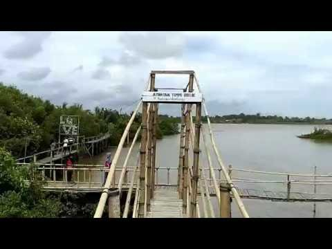 hutan-bakau-mangrove-wana-tirta-kulonprogo
