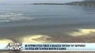 ΘΑΛΑΣΣΑ ΓΡΙΜΠΟΒΟ