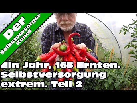 Selbstversorgung extrem. 165 Ernten in einem Jahr Teil 2