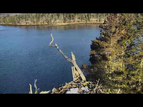 Audubon Osprey Nest Cam 03-19-2018 04:56:26 - 05:56:27